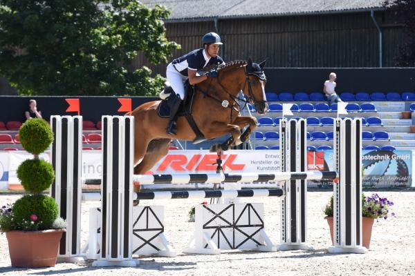 Horse Blue Way » Alshehab Sporthorses